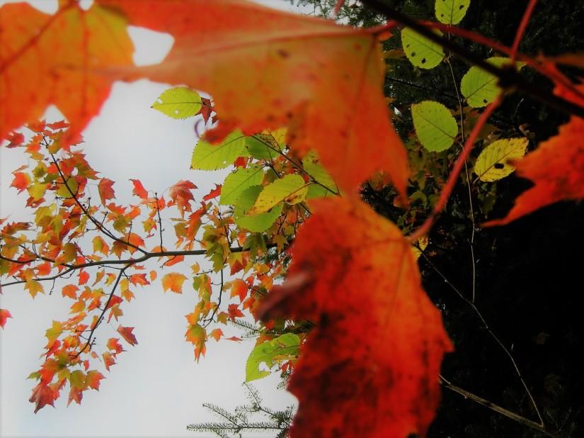 lament for autumn